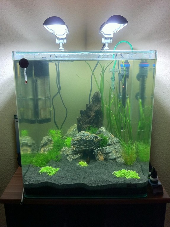 Community Mein Aquarium Aqua4youde for size 800 X 1071