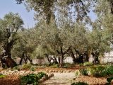 Filejerusalem Garten Gethsemane 2 Wikimedia Commons pertaining to dimensions 4592 X 2908