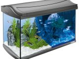 Tetra Aquaart Led Aquarium Komplettset Anthrazit Bei Zooroyal pertaining to size 1200 X 1200